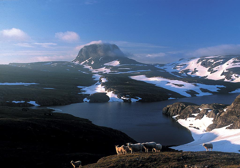 The Hardangervidda plateau