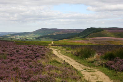 The Cleveland Way on Scarth Wood Moor