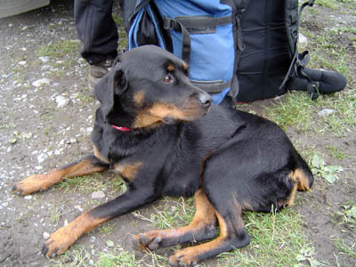 Gemma, reunited with owners after wandering on Scafell for two weeks