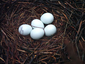 The five abandoned eggs