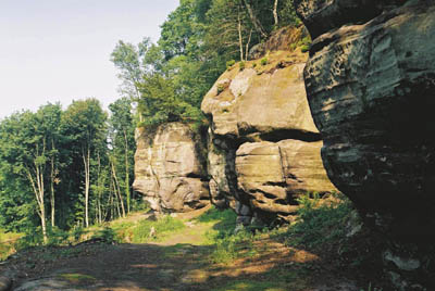 High Rocks, near Tunbridge Wells, before woodland management