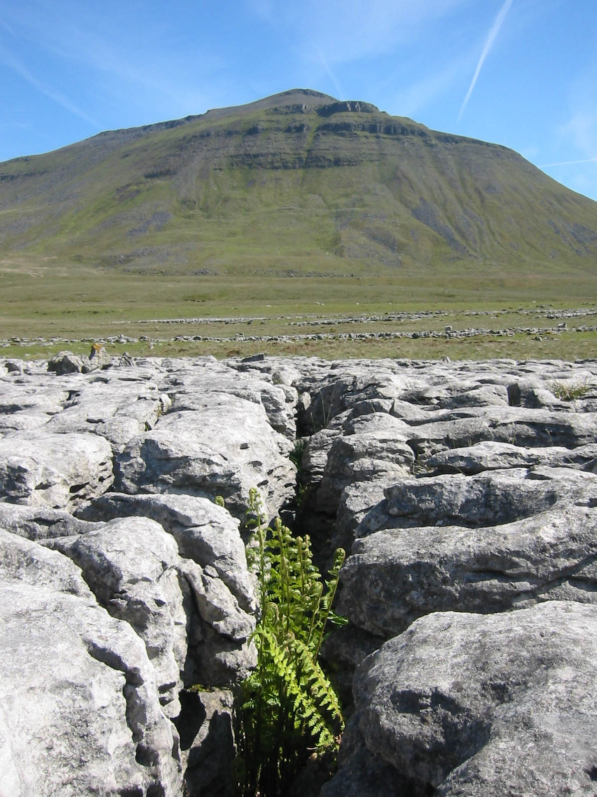 Limestone pavement and Ingleborough