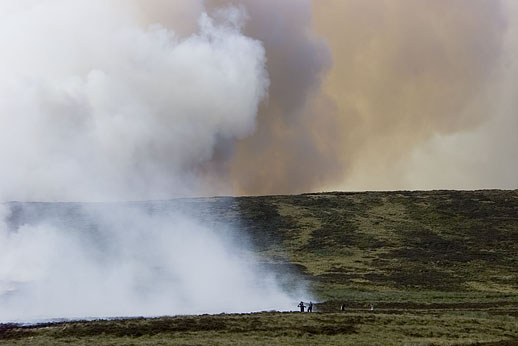 Birds are at risk from moorland fires