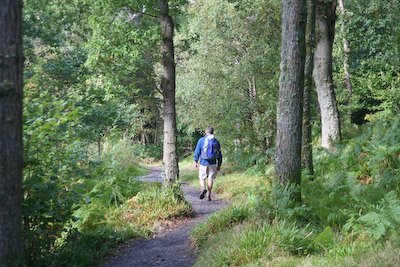 The maintained path through woodland alongside Loch Lomond