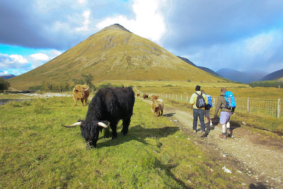 Paul, Chris and Nick sneak past the Highland cattle at Auch