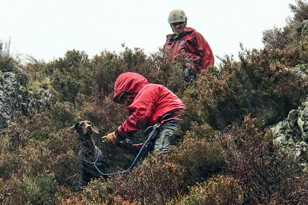 The dog was in a suprisingly good condition, rescuers said. Photo: Aberdyfi SRT
