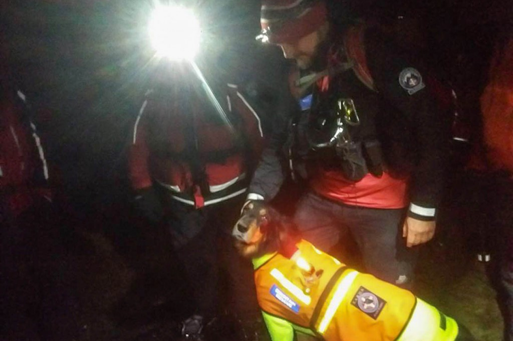 Members of the Search and Rescue Dogs Association joined the operation. Photo: Buxton MRT