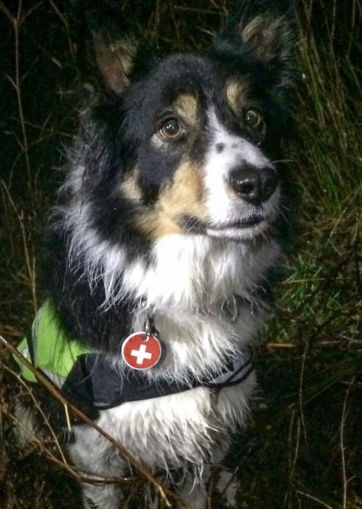 Search dog Meg. Photo: Calder Valley SRT