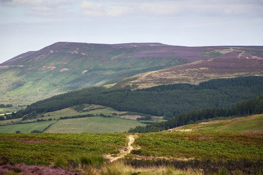 Mr Thompson was found after extensive searches in the Carlton Bank area of the North York Moors. Photo: Bob Smith/grough