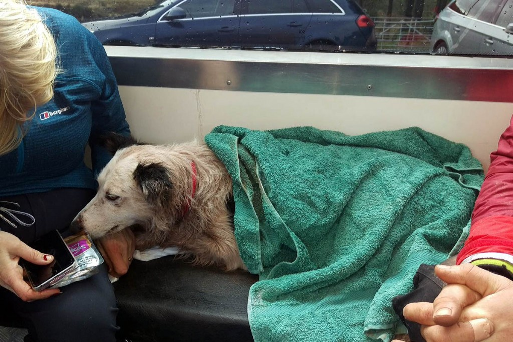 One of the dogs after the rescue. Photo: Central Beacons MRT