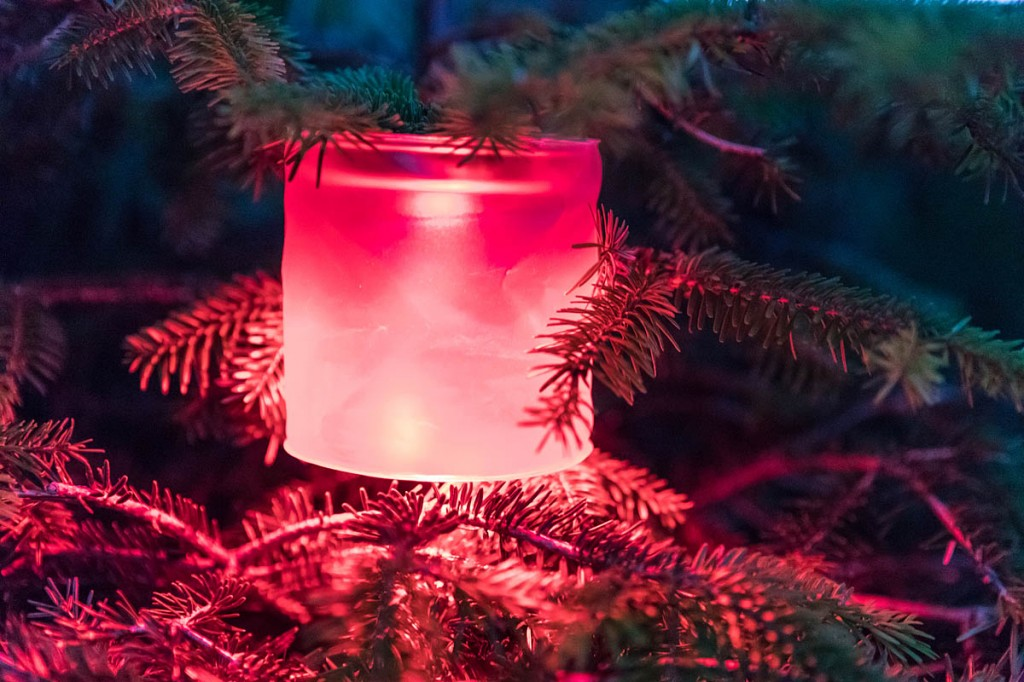 Helping things get festive, the Luci Solar Light illuminates the grough Christmas tree. Photo: Bob Smith/grough