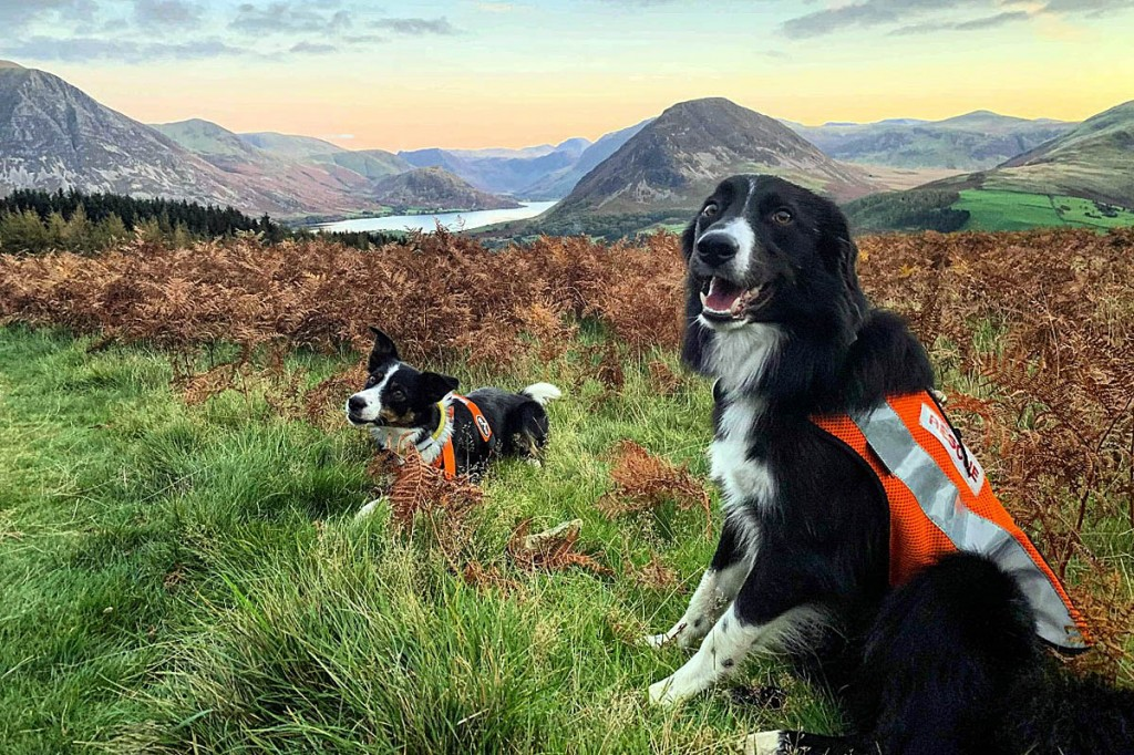 Search dogs took part in the incident on Darling Fell. Photo: Cockermouth MRT