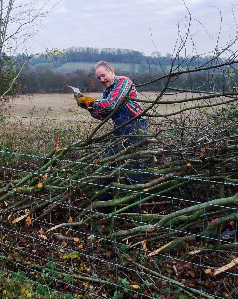 David Perry laying a hedge at Low Askew Farm