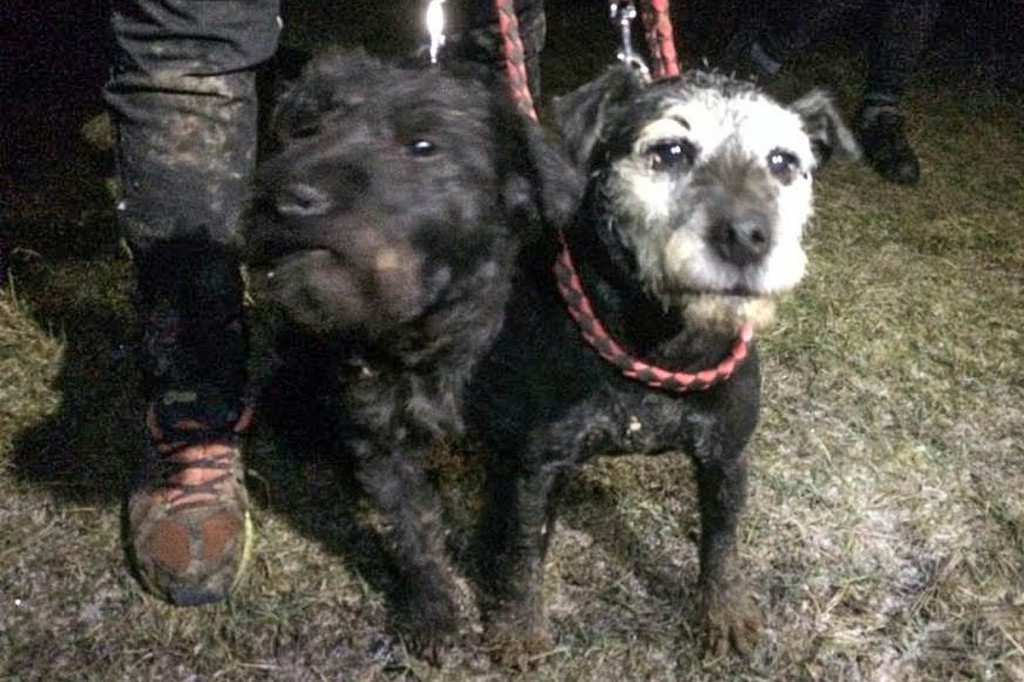 Two dogs went down the hole but only one came back. Photo: Derbyshire CRO