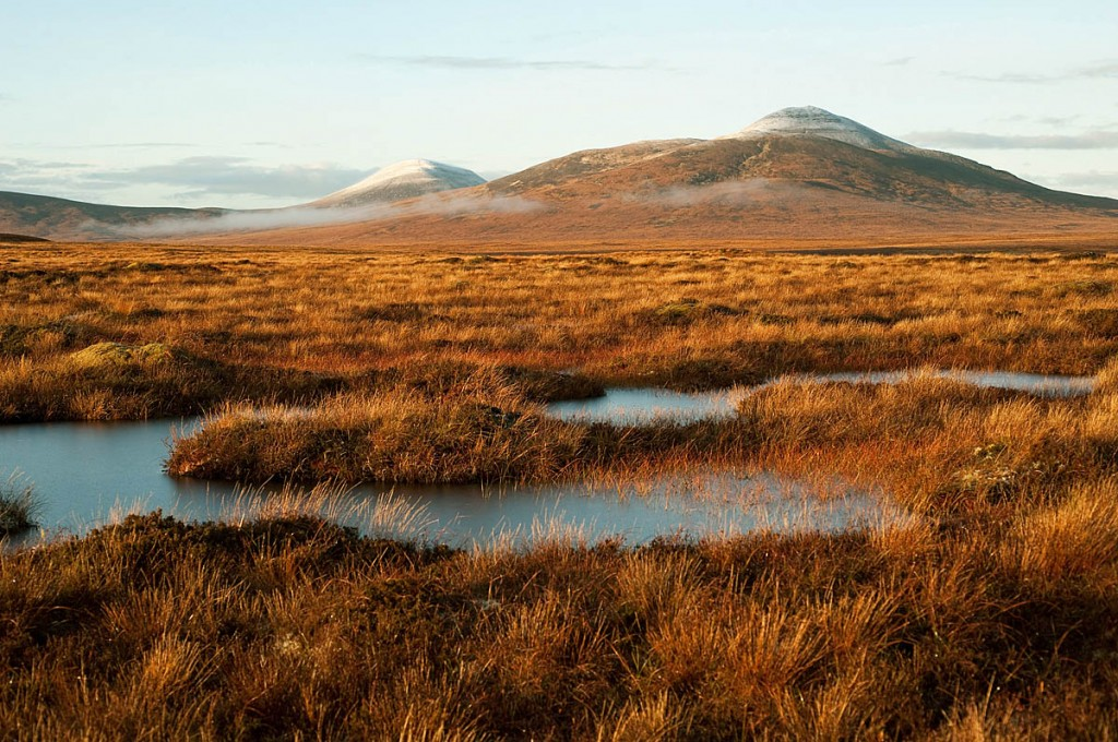 The EOCA cash will help restore peatland near Forsinard. Photo: Eleanor Bentall/RSPB Images