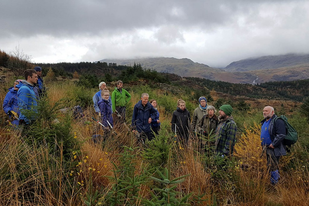Volunteers restored native forest during the event