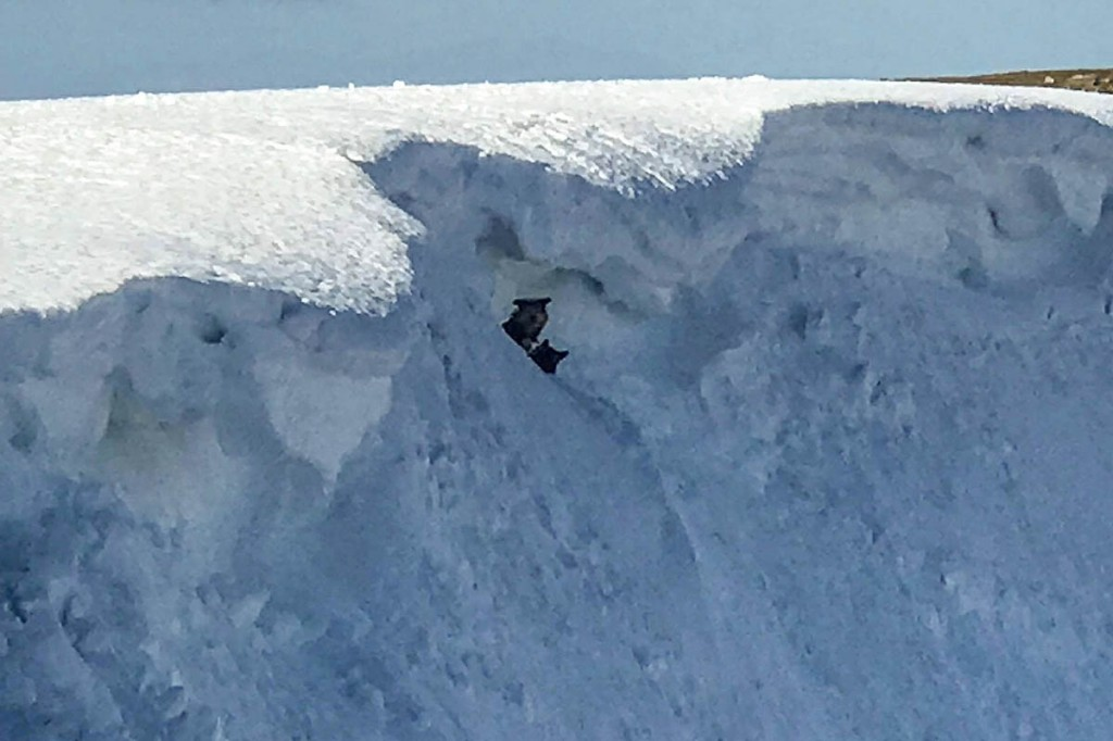 The two dogs were below an unstable cornice on the mountain. Photo: Scott Pilling
