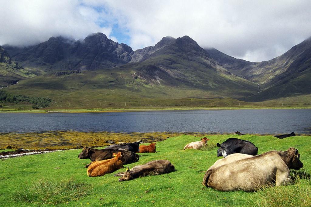 Blàbheinn, with cattle basking in the Skye sunshine. Photo: John Muir Trust