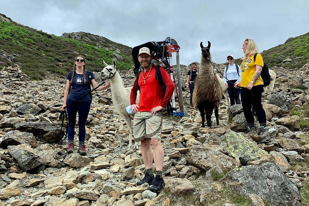 Rescuers with the group of llamas on the fell. Photo: Keswick MRT