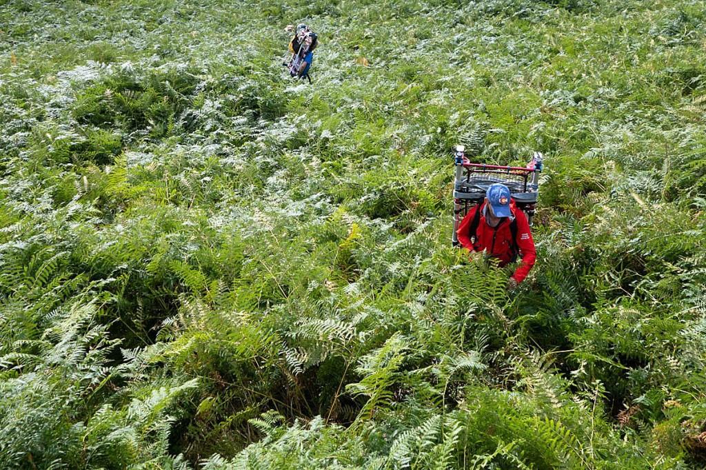 Team members faced a jungle of chest-high bracken to reach the walker. Photo: Keswick MRT