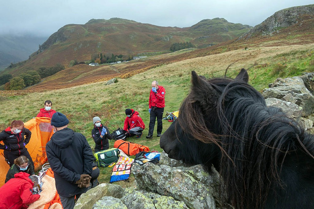 Rescuers create interest for a four-legged observer during the incident on Low Rigg. Photo: Keswick MRT