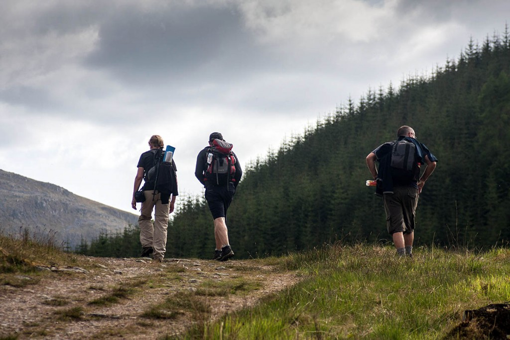 Mountaineering Scotland is seeking a planned approach to afforestation. Photo: Bob Smith/grough