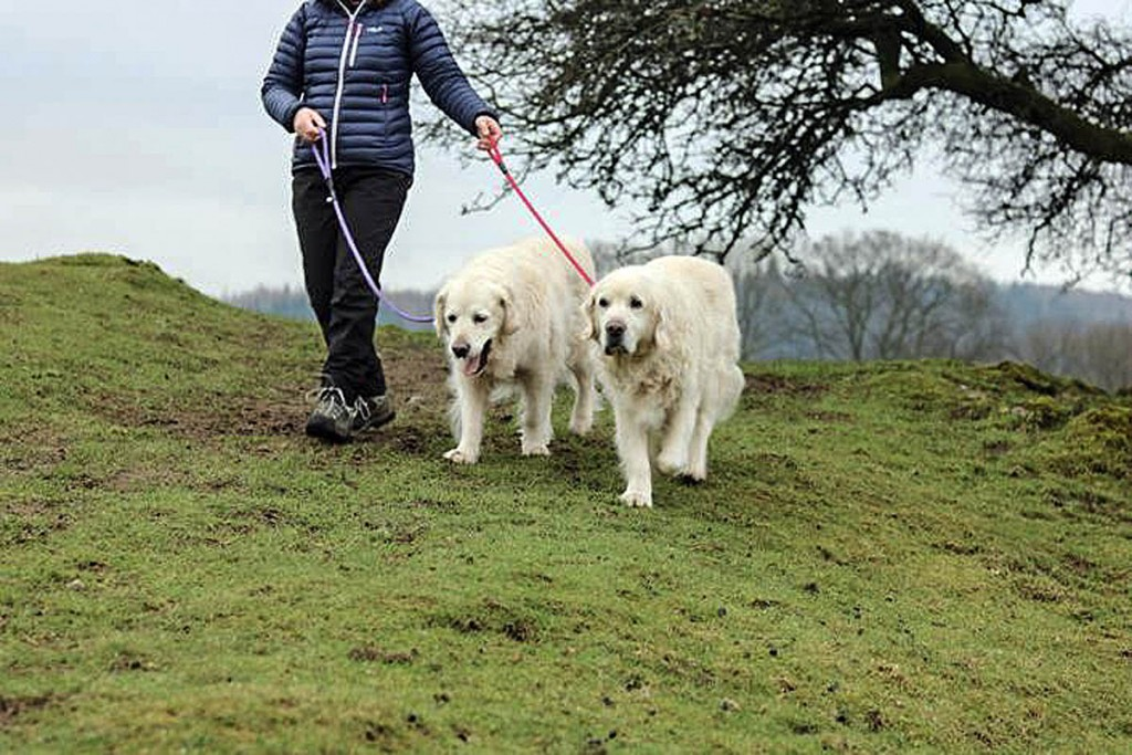 Dogs owners are being urged to follow the Countryside Code