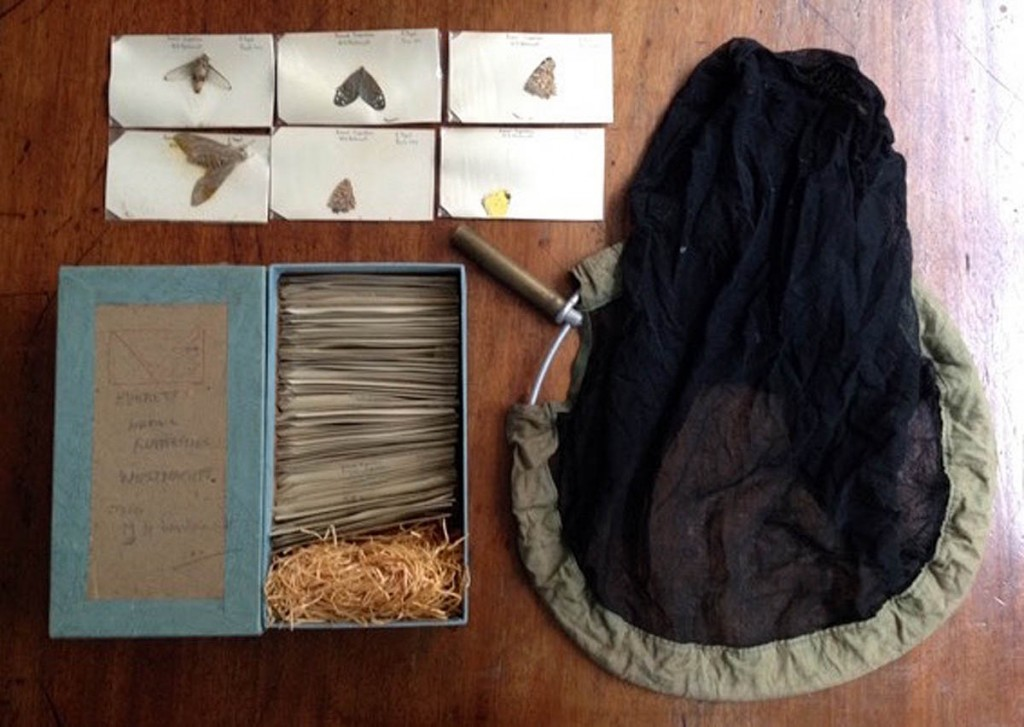 Mike Westmacott's Everest butterfly collection