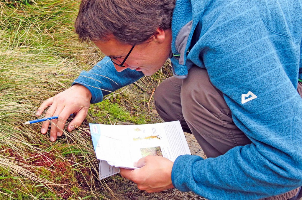 Outdoor fans are being urged to go sphagnum spotting