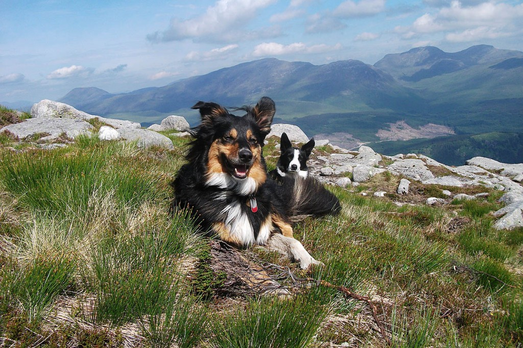 Mountaineering Scotland is offering advice to keep four-legged friends well and happy on the hill
