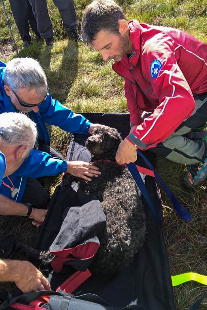 Rescuers place the injured dog on a stretcher. Photo: Northumberland National Park MRT