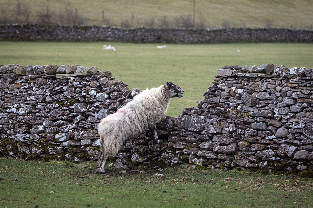 The Agriculture Bill is looking to a post-Brexit future. Photo: Bob Smith/grough