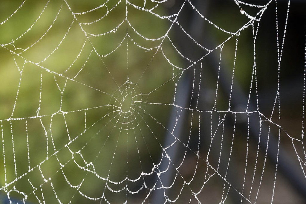 Spiders' silk is incredibly tough. Photo: Bob Smith/grough