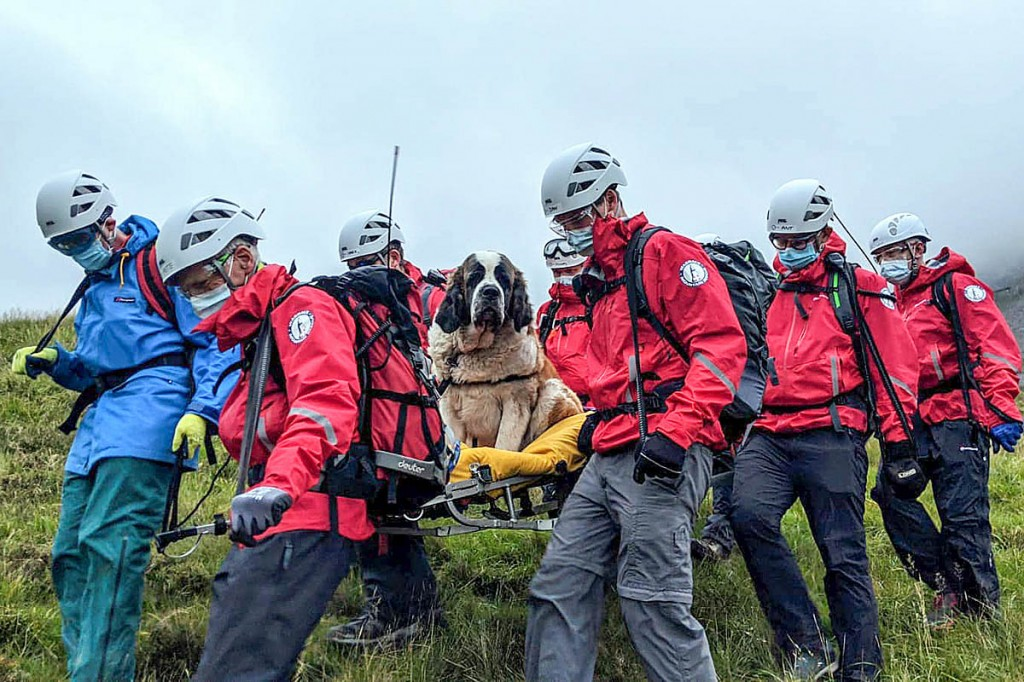 Daisy is stretchered from the mountain. Photo: Wasdale MRT