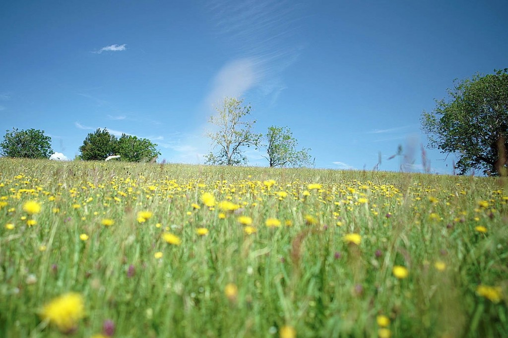 The films help outdoor enthusiasts identify common meadow flowers