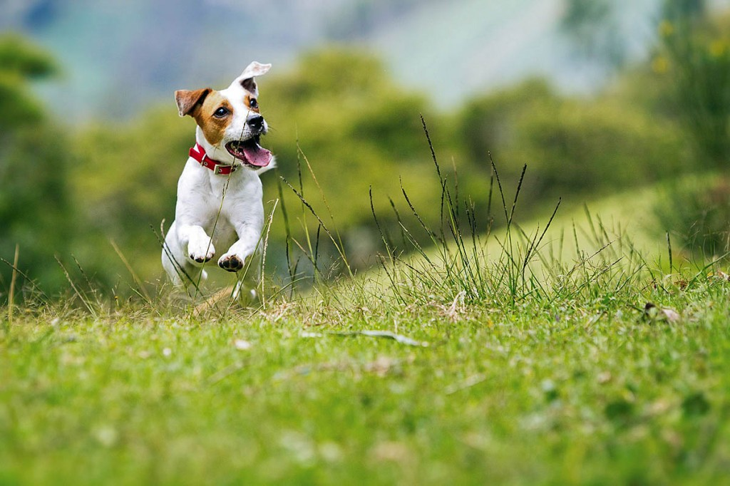 Hostellers will be able to take their dogs to 13 properties booked exclusively