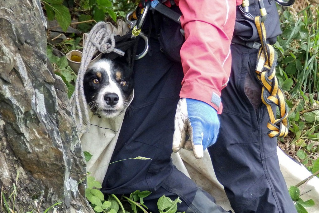 Mac in a sack: the dog is helped from his perch in the quarry. Photo: Aberdyfi SRT