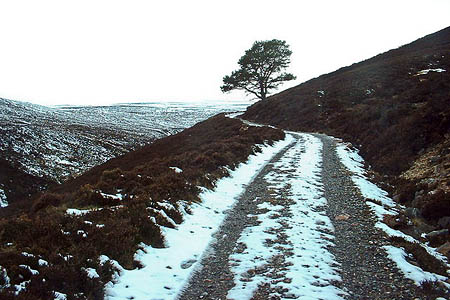 Mr Riach was due to walk the Burma Road between Carrbridge and Aviemore. Photo: David Medcalf CC-BY-SA-2.0
