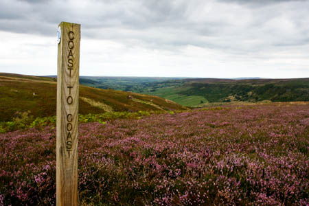 The Coast to Coast route crosses the heather-clad North York Moors before reaching its end on the North Sea shore
