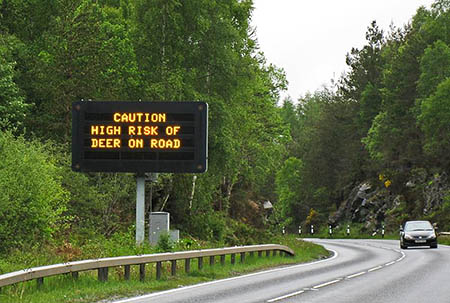 Signs on main roads will warn of the risk of deer collisions. Photo: SNH