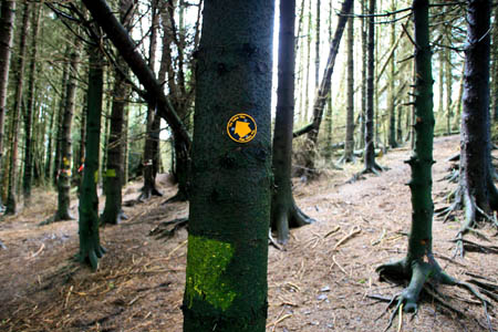 Forest rights of way must be maintained, say the Ramblers
