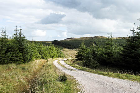 Gisburn Forest. Photo: Tom Richardson CC-BY-SA-2.0
