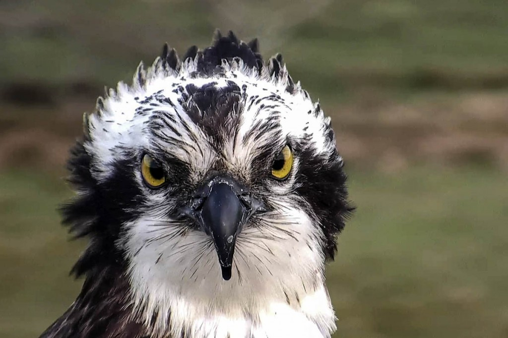 Mrs G reappeared in the Glaslyn valley this week