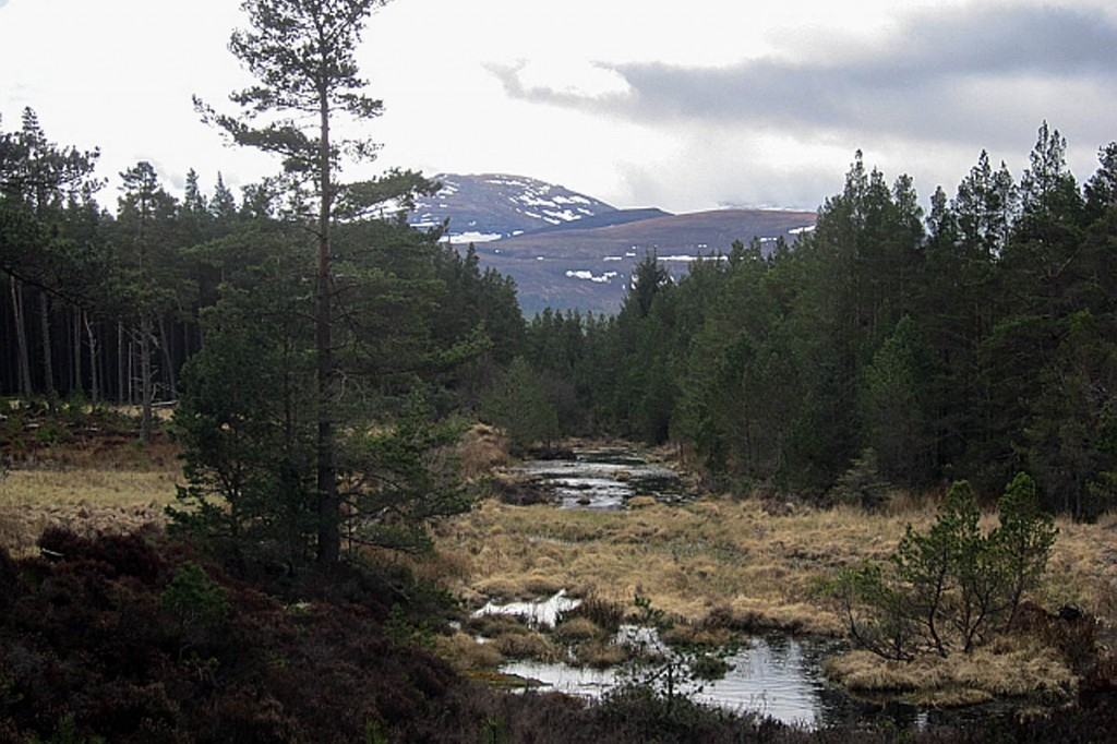 The couple set out for a walk from Glenmore, near Aviemore. Photo: Richard Webb CC-BY-SA-2.0
