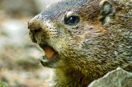 Stephen Gough had his own Groundhog Day this week. Photo: Carly Lesser and Art Drauglis CC-BY-SA-2.0