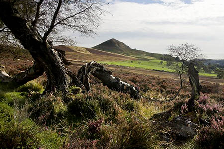 Hawnby Moor, where the body was found. Photo: Colin Grice CC-BY-SA-2.0