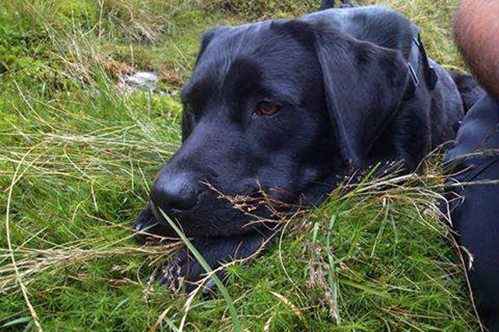 Labrador Archie escaped relatively unscathed from his fall. Photo: Keswick MRT