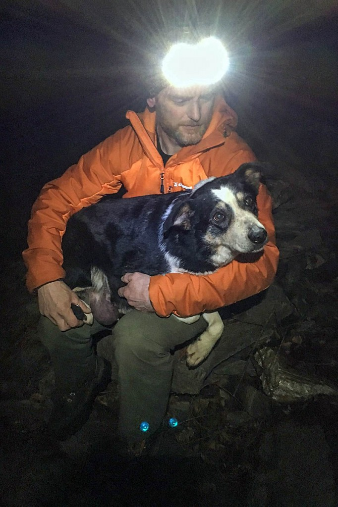 Sheepdog Nell was rescued after 12 days in the gorge. Photo: Lochaber MRT
