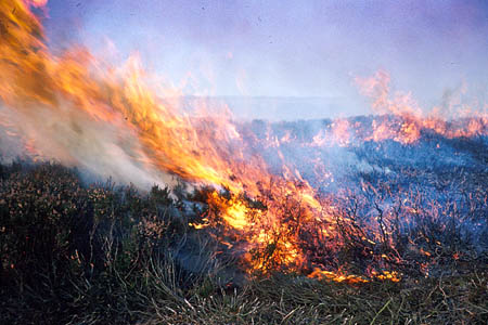 The risk of starting a wildfire is high after the prolonged hot spell