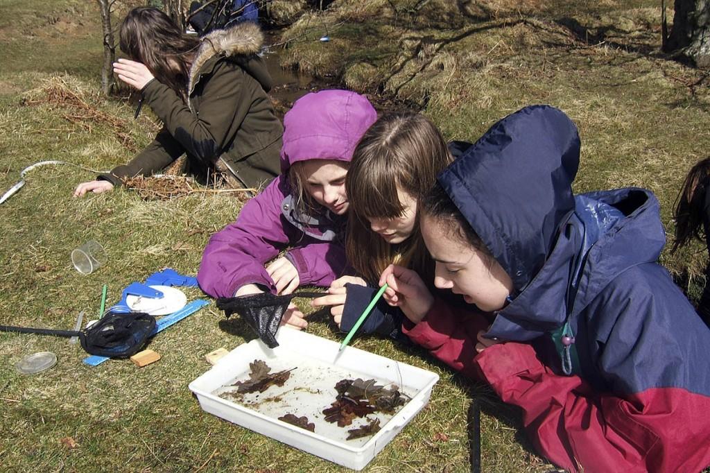 Young visitors to the North York Moors look at freshwater inverterbrates. Photo: North York Moors NPA